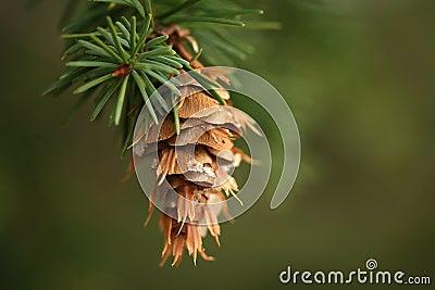 Hanging pine cone