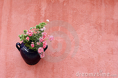 Hanging plant  on terracotta painted wall