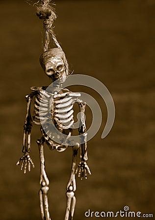 Free Hanging Skeleton Bones Royalty Free Stock Photo - 6346435