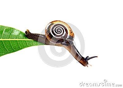 Hanging snail