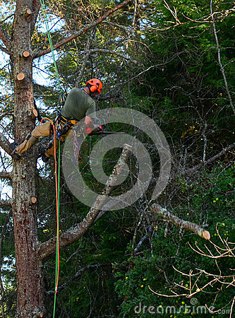 Free Hanging Tree Cutter Cutting Limbs From Tree Stock Images - 44398934