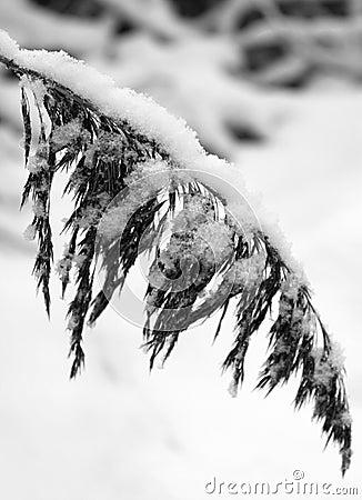 Hanging winter branch 1