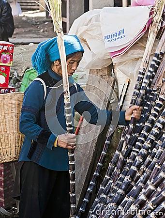 Hani Woman picking Sugar Cane Editorial Stock Photo