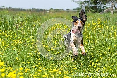 Happy active dog