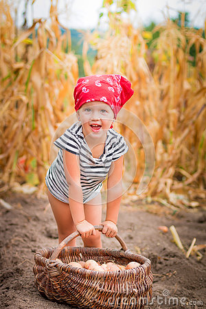 Free Happy Baby Girl On The Garden With Harvest Of Potatoes In The Basket Near Field  Dry Corn  Background. Dirty Child In Royalty Free Stock Images - 74485309