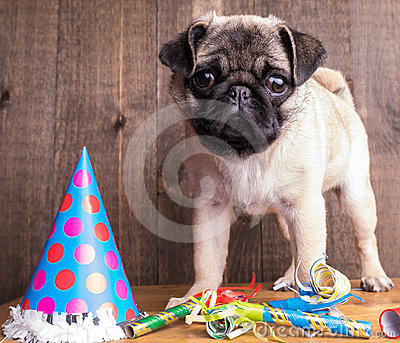 Happy Birthday Cute Pug Puppy