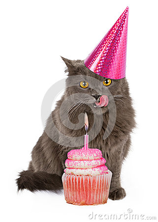 Happy Birthday Party Cat With Pink Cupcake Stock Photo