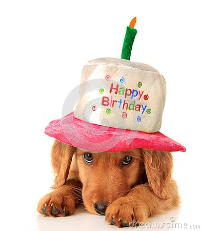 Free Happy Birthday Puppy Royalty Free Stock Photos - 36640088