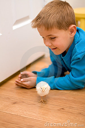 Free Happy Boy On Floor With Pet Chick Royalty Free Stock Photography - 13742897