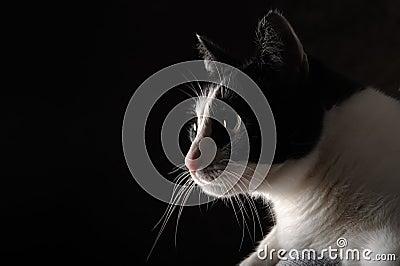 Happy cat on black background
