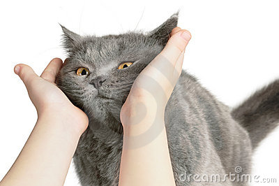 Happy cat is pleased with hand
