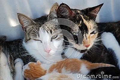 Happy Cat s Family