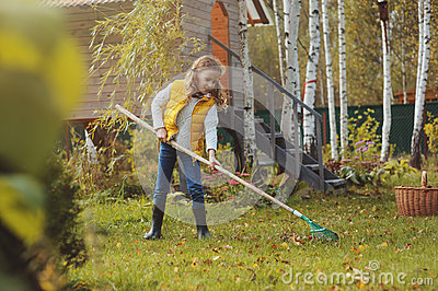 Happy child girl playing little gardener in autumn and picking leaves into basket. Seasonal garden work Stock Photo