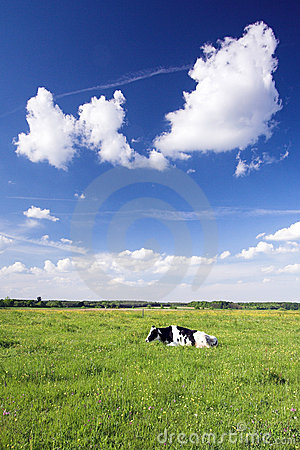 Free Happy Cow Stock Images - 5259164