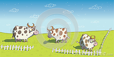 Happy Cows on Grassland