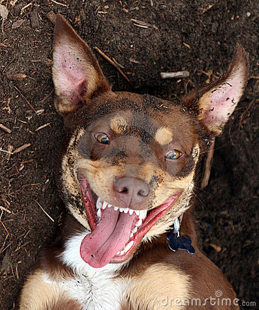 Image result for a picture of a dirty dog