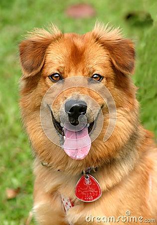 Free Happy Dog Royalty Free Stock Photography - 276127