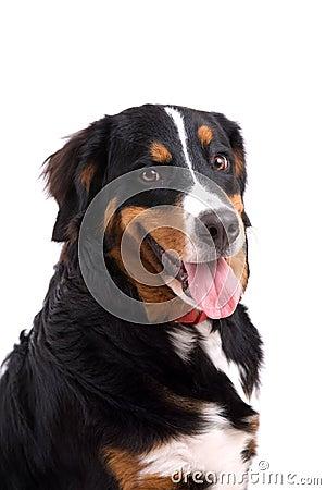 Free Happy Dog Stock Photos - 3543573