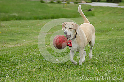 Happy dog with ball