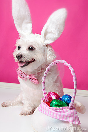 Happy dog at easter
