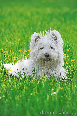 Free Happy Dog In A Park Royalty Free Stock Photo - 14572085