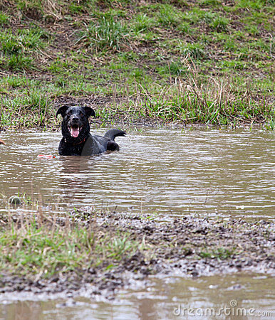 Happy dog in a mud hole
