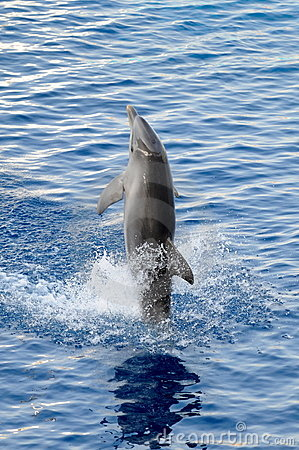 Happy dolphin in the water