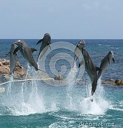 Free Happy Dolphins Stock Photo - 13184590