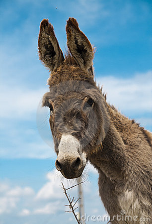 Free Happy Donkey Royalty Free Stock Photos - 14244008
