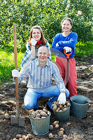 Happy family harvesting potatoes