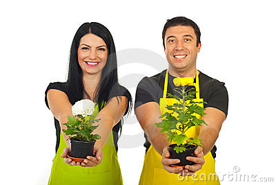 Happy florists giving chrysanthemum pots