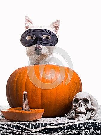 Happy Halloween Dog