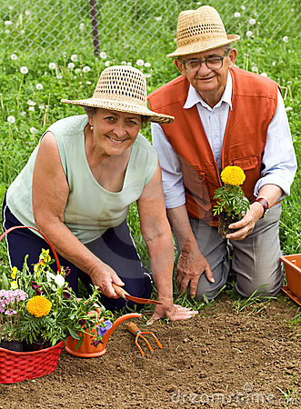 Happy healthy seniors gardening