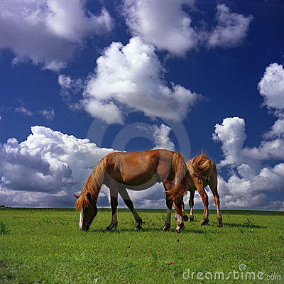 Free Happy Horses Royalty Free Stock Images - 3845939