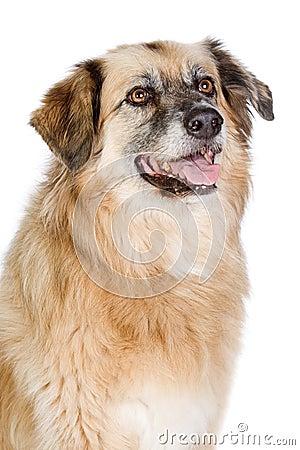 Happy Large Crossbreed Dog