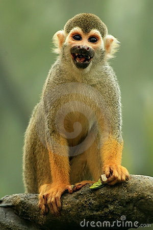 Free Happy Little Monkey Royalty Free Stock Photos - 8830418