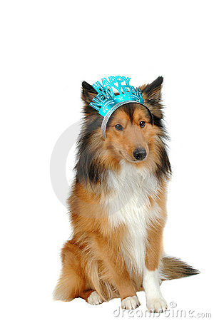 Happy new year dog 2