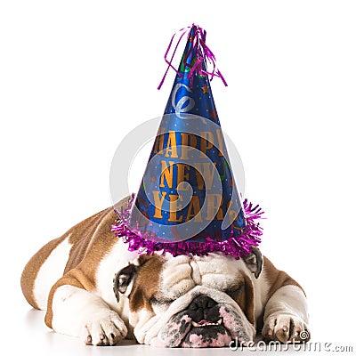 Free Happy New Year Dog Stock Photography - 44115932
