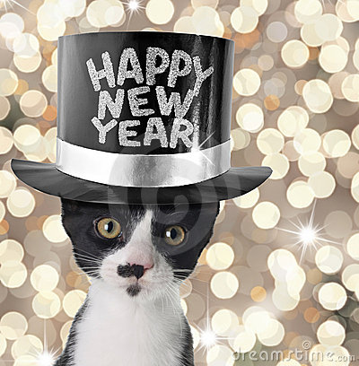 new-year-cat