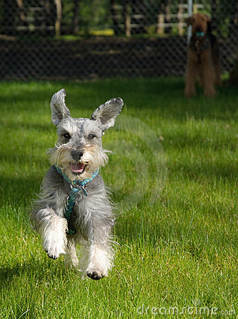 Happy playful small dog outdoors