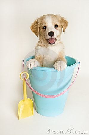 Happy puppy in a beach pail