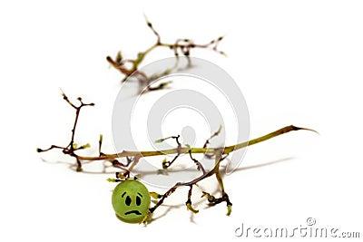 Happy / sad grape fruit
