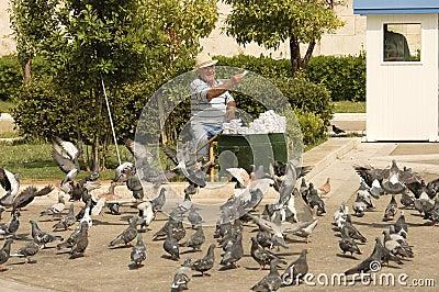 Happy senior feeding pigeons Editorial Image