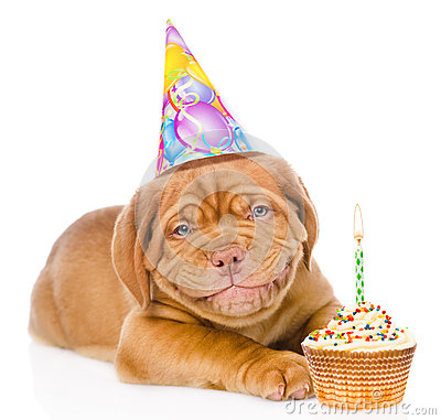 Free Happy Smiling Bordeaux Puppy Dog With Birthday Hat And Cake. Isolated Stock Photos - 70447593
