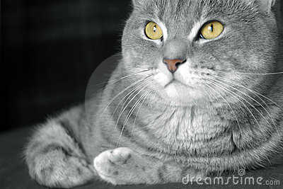 Happy tabby cat with golden eyes