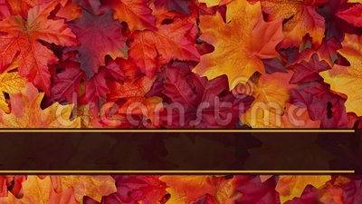 Happy Thanksgiving Greeting Card animated. Happy Thanksgiving Greeting Card, Some fall leaves greeting card with text Happy Thanksgiving stock video