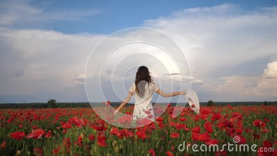 Happy Woman in white dress and hat on Poppy Flowers Field at summer, blue deep sky and clouds. Back view. Video footage stock footage
