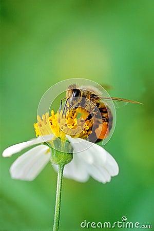 Hard working bee