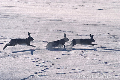 Hare play