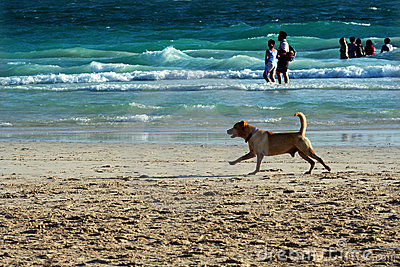 Harmonious beach